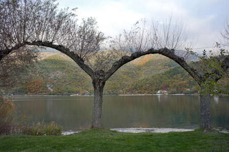 Bent trees on Lake Scanno, Abruzzo, Italy photo
