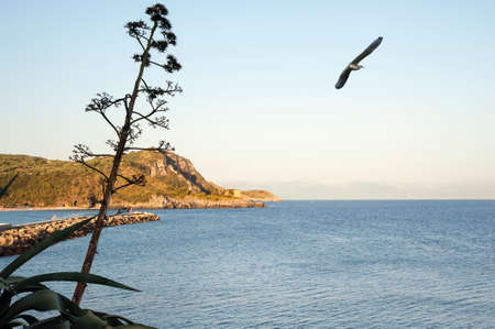 navy pier: Headland