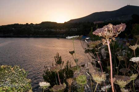 inlet bay: Mediterranean scrub along the coast at sundown