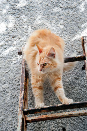 A reddish stray cat descending a metal ladder.