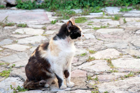 An adorable stray cat resting in the street.
