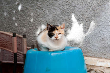 An adorable feral pussycat with the fur of the face of two colors resting on a bucket.