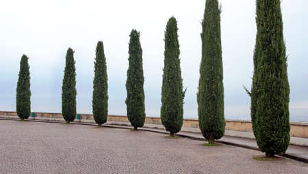 A boulevard with cypress trees along the parapet on the hilltop. Verona, Italy.