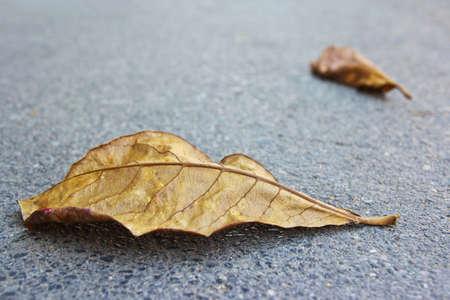 hojas secas: Hojas secas en el camino