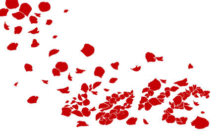 red rose petals: rose of love on white background