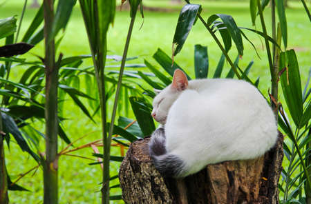 Cat sleeping in the garden Stock Photo - 14237450