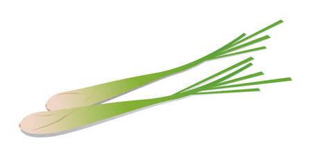 Lemongrass  Vector