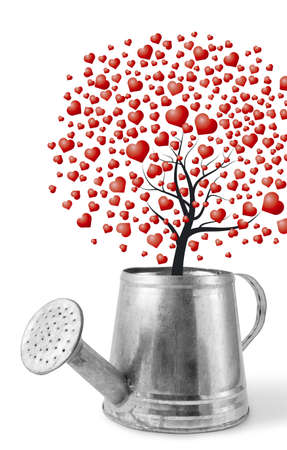 Heart tree in the water can Stock Photo - 17426097