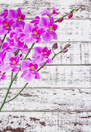 Orchids on white wood  photo
