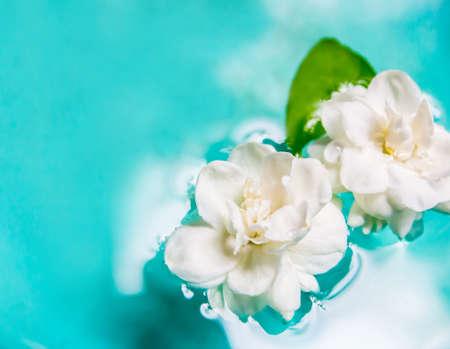 Jasmine flower on water