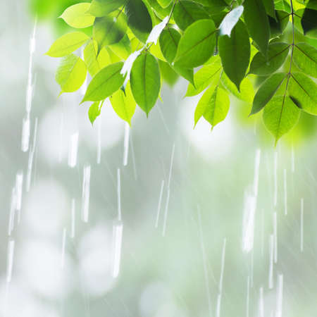 Close up leaves in rainy day