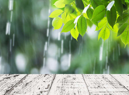 Leaves in rainy day for background