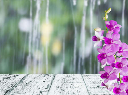 Orchids in rainy day photo