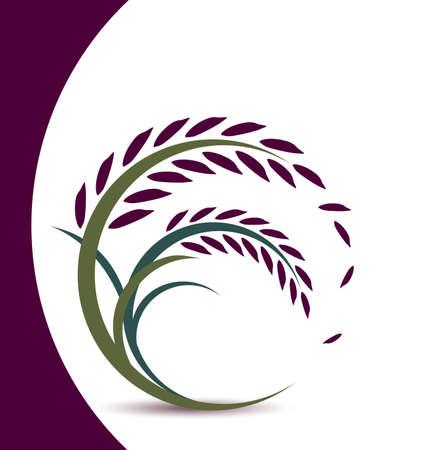 crecimiento planta: Dise�o de la baya del arroz en el fondo blanco