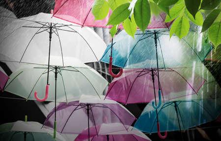 pellucid: Colorful umbrellas decoration in rainy day