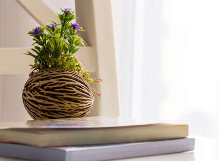 treatise: Flower pot in the living room Stock Photo