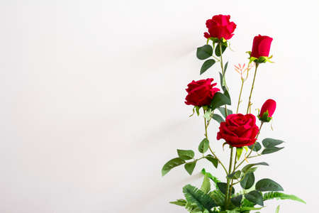 mate married: Red roses in the flower pot