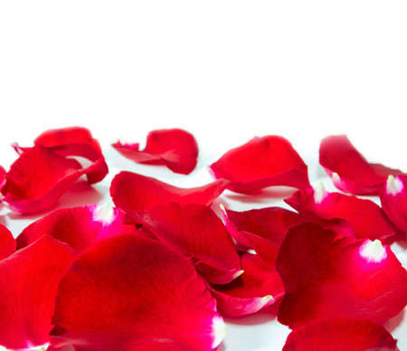 mate married: Red rose petals on white background