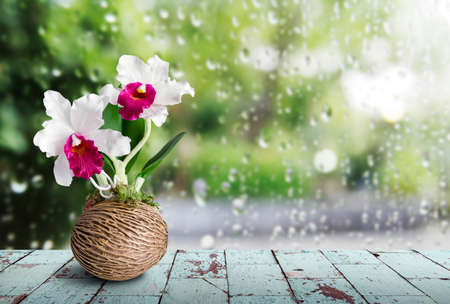 Cattleya orchid on wooden table in rainy day Stock Photo