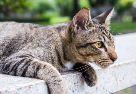 moggy: Cat looking forward on the stone bench