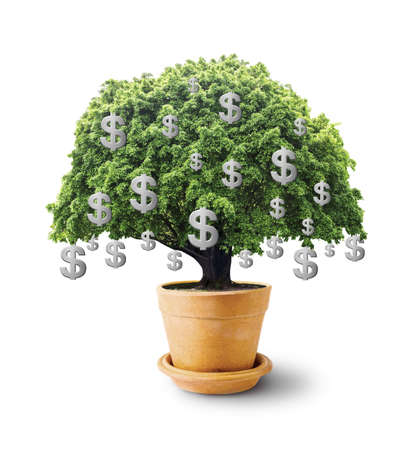 Big tree in flowerpot with dollar sign on white background