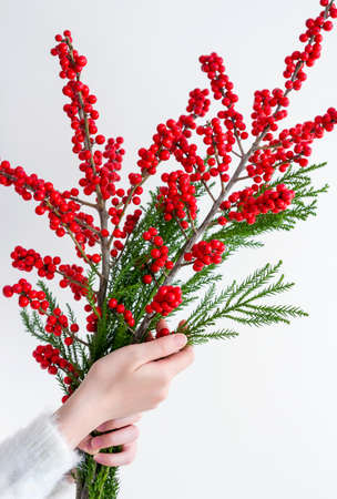 Woman hands holding ilex verticillata or winterberry for christmas decoration