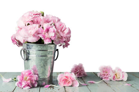 Pink carnation flowers in zinc bucket on white background 免版税图像