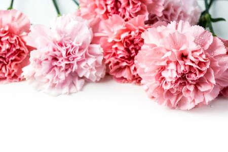 白い背景に分離されたピンクのカーネーションの花