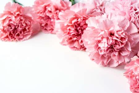 Pink carnation flower on white background  Imagens