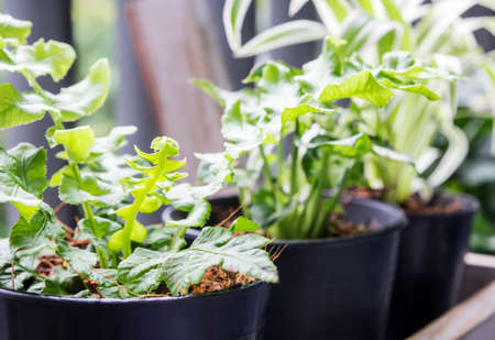 Home and garden concept of green leave fern in pot on balcony Stock Photo