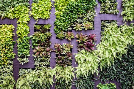 Wall decoration of vertical garden