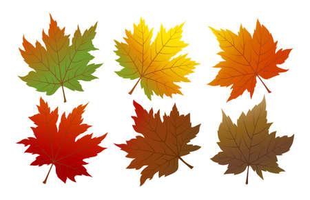 ベクトル秋のカエデの葉は、白の背景に分離