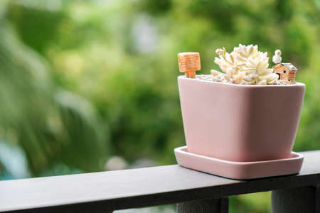 Home and garden concept of succulent plant in pink flowerpot at terrace