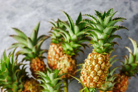 Mini pineapple tropical fruit for summer concept Stockfoto