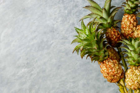 Mini pineapple tropical fruit with copy space for summer concept