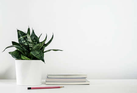 Sansevieria trifasciata or Snake plant in pot and book with pencil on the white wooden table home decor