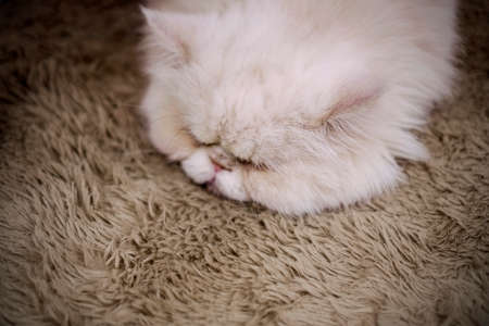 Cat sleeping on the brown carpet Stock Photo