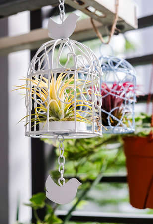 Tillandsia in bird cage decoration in the small garden at balcony Stock Photo