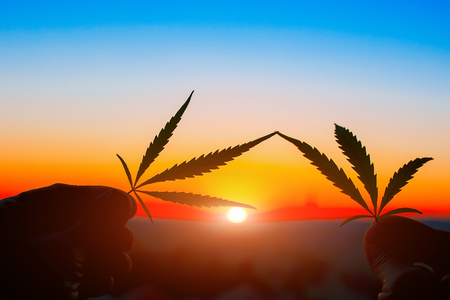 Silhouette cannabis leaf in hand on the horizon with sunset. Marijuana leaves against the backdrop of beautiful sunset