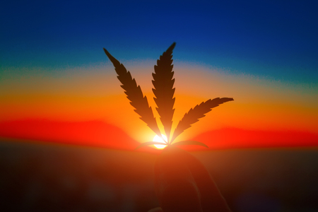Cannabis leaf in hand on the horizon with sunset. Marijuana leaves against the backdrop of beautiful sunset