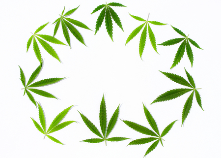 Green cannabis leaves, marijuana on white background. Hemp, ganja leaf. Top view, image wallpaper close up