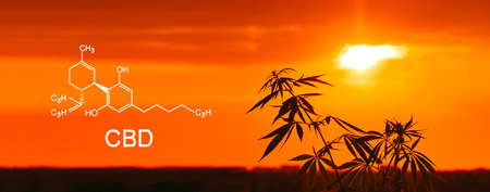 Cannabis of the formula CBD and THC elements in cannabinoid. Blurred background with soft focus Imagens