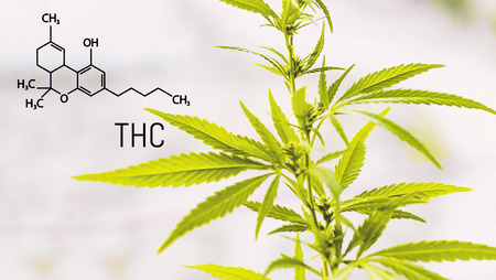 Tetrahydrocannabinol and chemical formula. Structural model of THC molecule. Premium marijuana and cannabis products. Medical thc and cbd contents in sativa, indica high quality