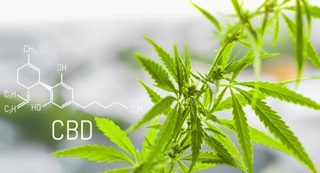 Cannabis met de formule CBD cannabidiol. Concept van het gebruik van marihuana voor medicinale doeleinden. Stockfoto