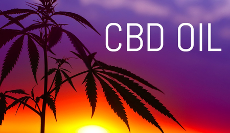 CBD oil, Cannabidiol. Medical cannabis. Growing premium marijuana product. Natural cannabis.