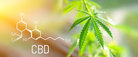 CBD Chemical Formula, Beautiful background of green cannabis flowers A place for copy space