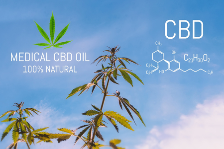 Cannabis CBD oil and structural chemical formula CBD. Medical extract. Cannabis concept Stock Photo