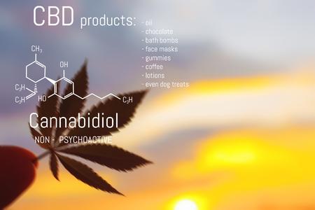 CBD Marijuana products and the chemical formula of Cannabidiol. Premium cannabis grows. Impact of (positive and negative) marijuana on human health, nervous system, mental activity