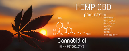 Hemp CBD oil, Medical marijuana products including cannabis leaf. Herbal organic medicine product. Natural herb essential from nature. Chemical formula of cannabidiol Фото со стока