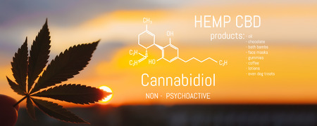 Hemp CBD oil, Medical marijuana products including cannabis leaf. Herbal organic medicine product. Natural herb essential from nature. Chemical formula of cannabidiol 스톡 콘텐츠